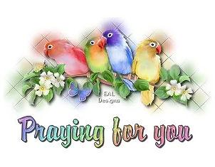 love birds praying for you