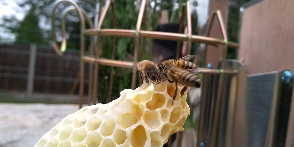 Queen Bee breeding course