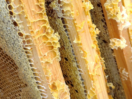 Attend the next honey extraction experience