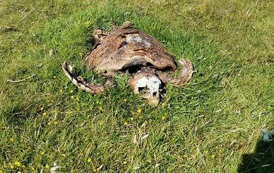 200810-dead-turtle-720x457.jpg