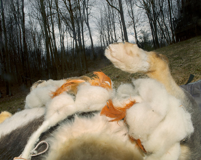 Dog, foot, feathers, forest, side, grass, fur, toe, tree