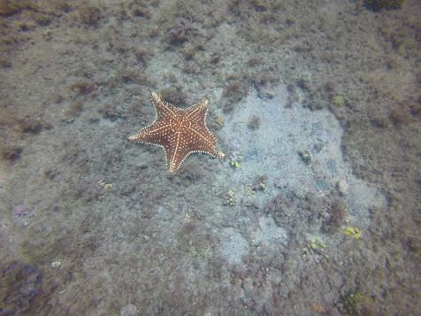 Open water fev 21 13.JPG