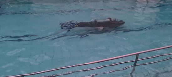 Curso mergulho8.mp4