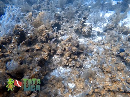 Recifes de Coral.jpg