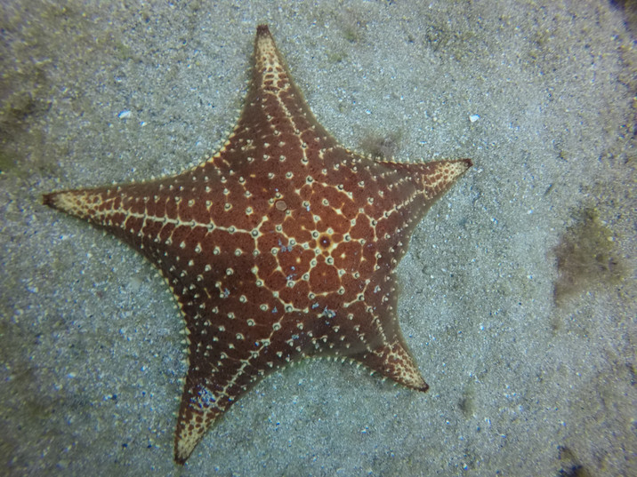 estrela do mar1.JPG