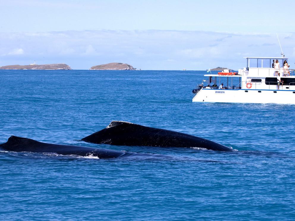 baleias_abrolhos.jpg