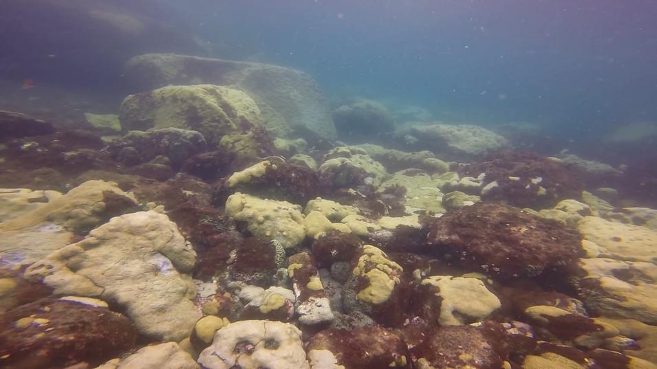 Open water fev 21 11.mp4