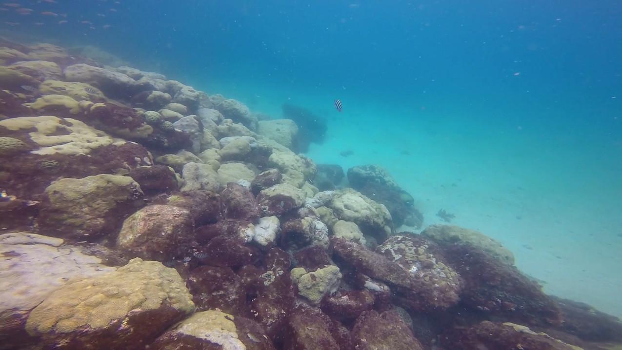 Open water fev 21 15.mp4