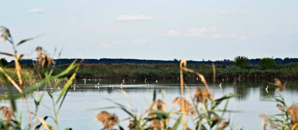 Specijalni rezervat prirode Slano Kopovo