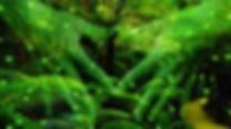 PlantConsciousness.jpg