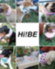 HIBE.jpg