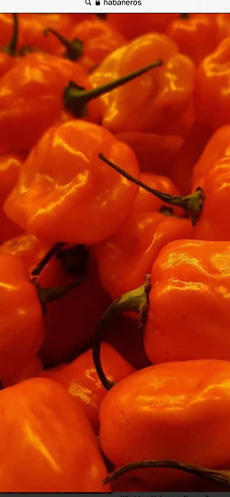 Habanero peppers very hot $1 each
