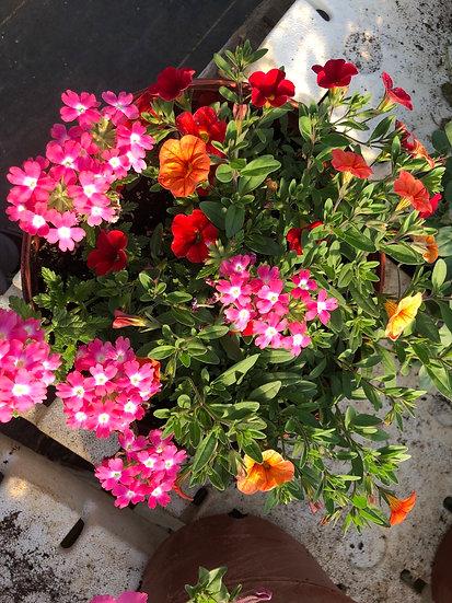 Mix flower pot