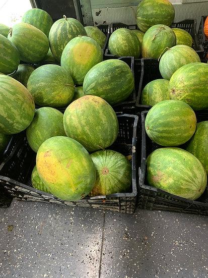 Seedless watermelon $6.00 each
