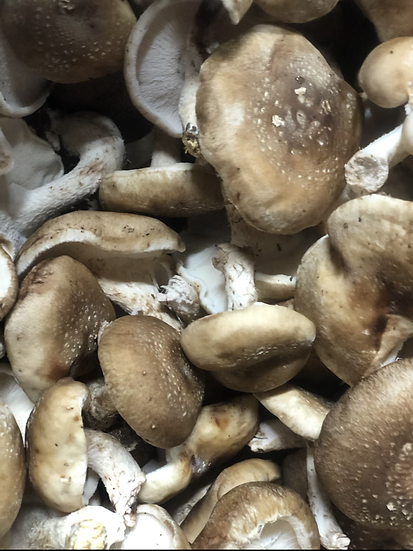 Shiitake mushrooms $6.00 pt