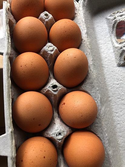 Fresh brown eggs $5.00 dozen