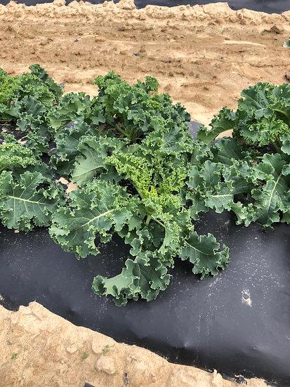 Kale bunch $4.00 bunch