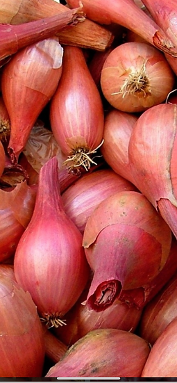 Shallots (new crop) 5$ pint