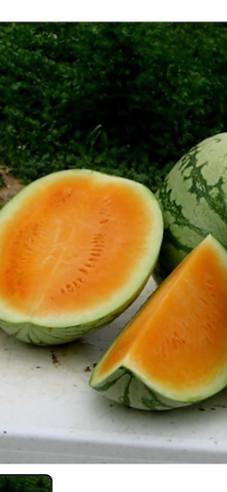 Seedless orange watermelon $7.00 each
