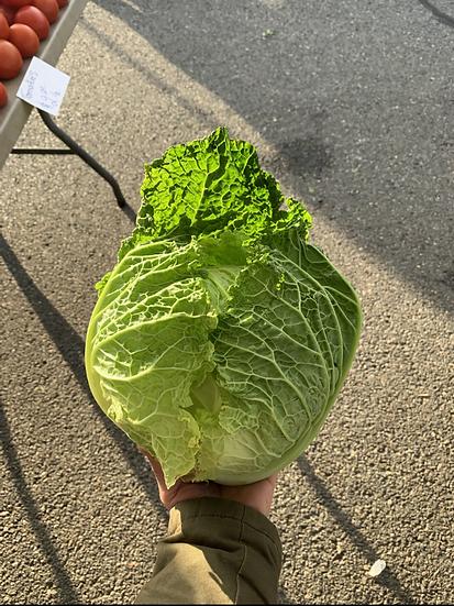 Savoy cabbage $4.00