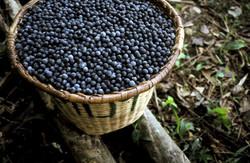 Açai Berries