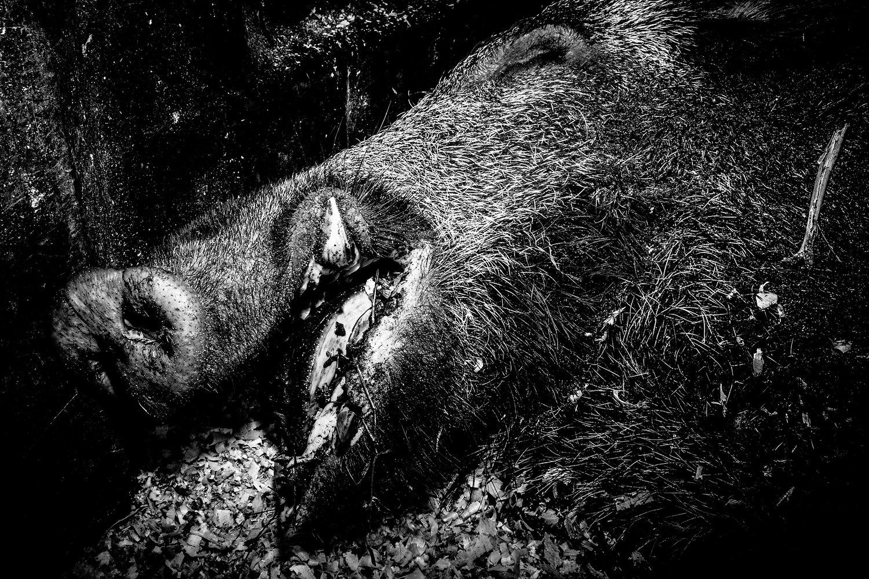 Best Photobook of the Year PhotoEspaña 2020, Sang Noir, Elie Monferier