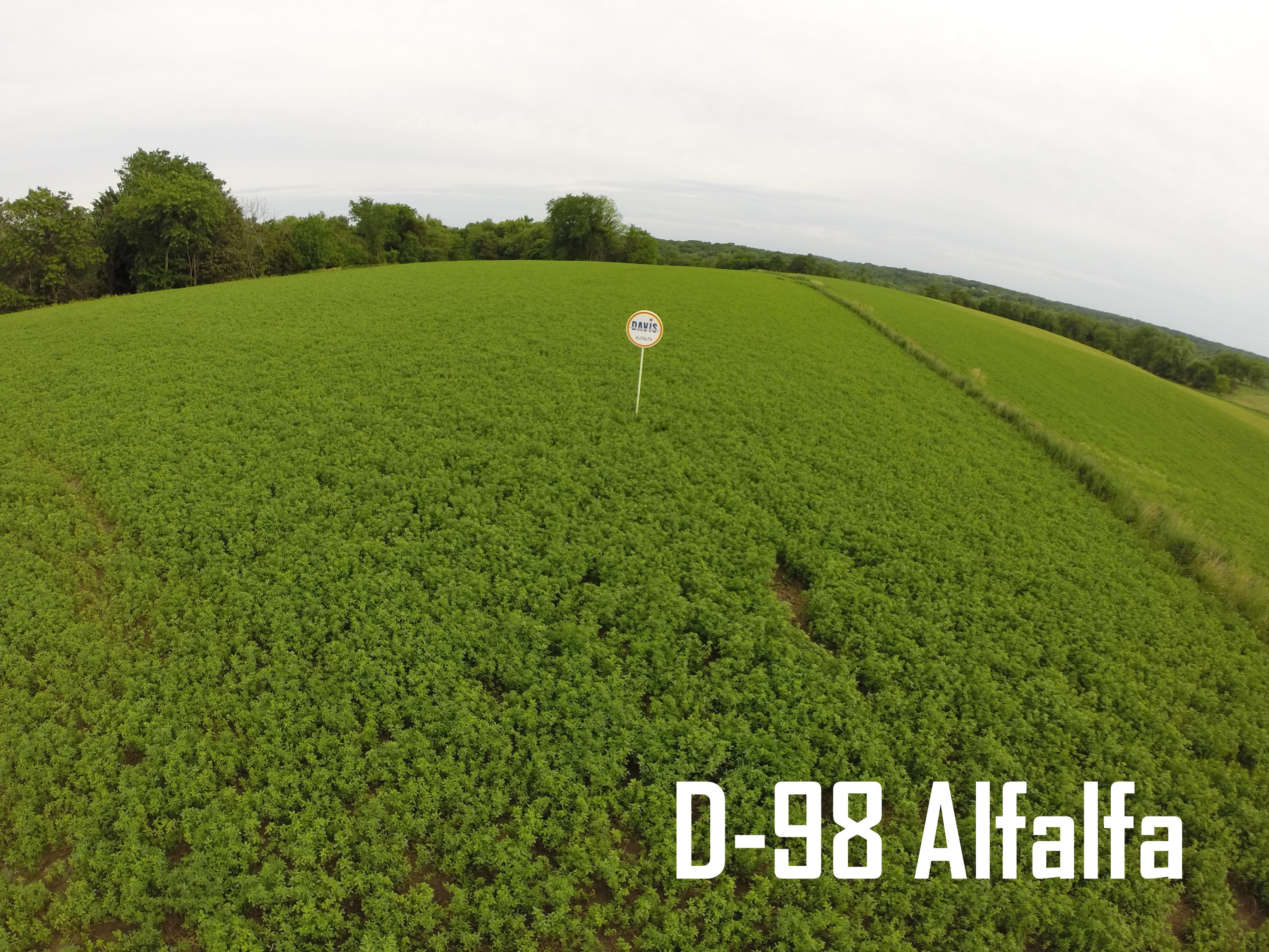D-98Alfalfa
