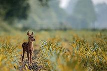deer-3955031_1920.jpg