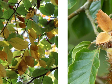 Five Trees to Look Out for This Autumn