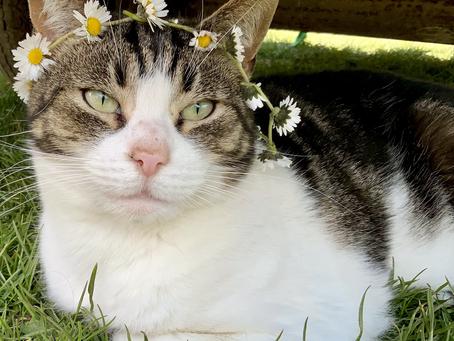 Feline Daisy Crown