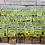 Thumbnail: Fudge Gift Box 'Bumblebees' choose 5 bags of fudge, build a box!