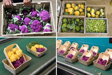 Gemüse Bigler 020.jpg