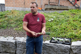 Gemüse Bigler 022.JPG