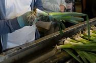 Gemüse Bigler 017.JPG