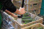 Gemüse Bigler 018.JPG