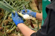 Gemüse Bigler 008.JPG