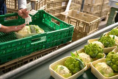 Gemüse Bigler 011.JPG