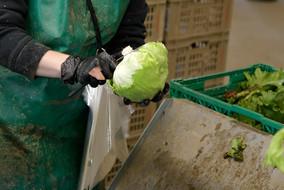 Gemüse Bigler 004.JPG