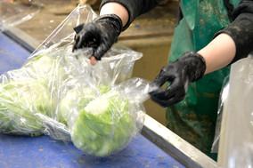 Gemüse Bigler 005.JPG