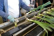 Gemüse Bigler 016.JPG