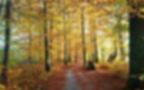 Wanderweg-1aweb.jpg
