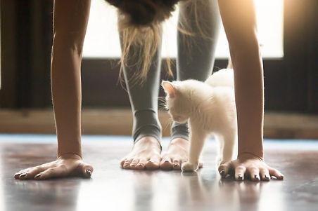 cat-yoga-shutterstock.jpg