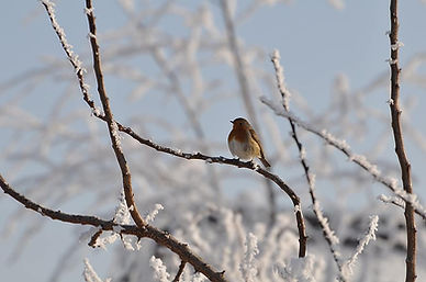 bird-snow-cold-nature-winter-landscape-t