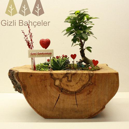 O Ağacın Altında Bonsai