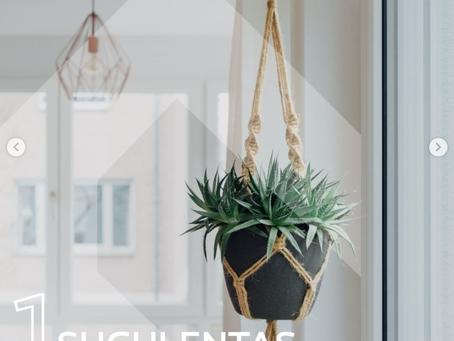 5 plantas para decorar o interior da sua casa!
