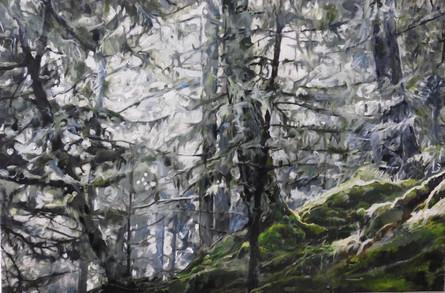 Sooke Rain Forest