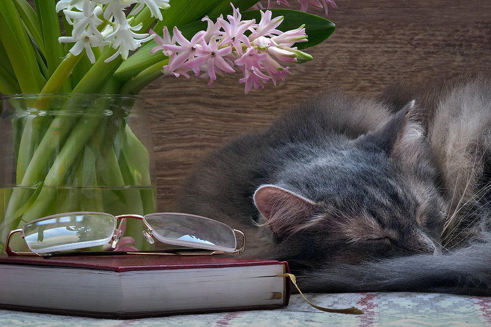 bigstock-Cat-flowers-book-and-glasses-11
