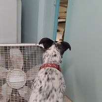 Iram looking at the action in the grooming room
