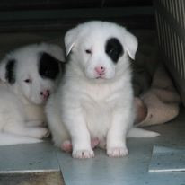 Puppies born here (by accident!)
