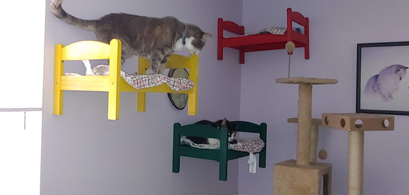 Our cat room, beds for their hignessess
